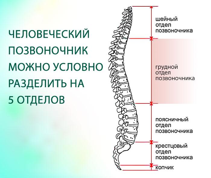 Остеохондроза в шейном отделе позвоночника лечение отзывы